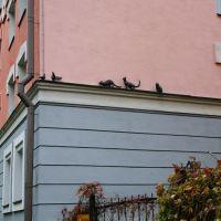 """Скульптурная композиция """"Кошки охотятся на голубей"""", Новгород"""