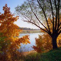 Река Молога. Осень, Пестово