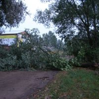 Поваленное дерево, Пестово