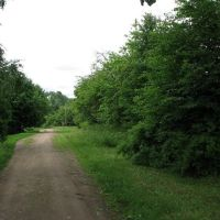 """Зеленая"" улица, Поддорье"