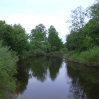 Река, Хвойное