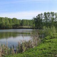Лесхоз. Озеро, Болотное
