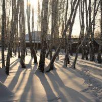 Зимний лес, Венгерово