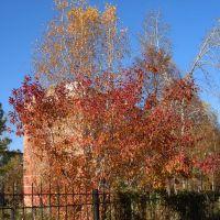 Цвета осени: жёлтый, красный, зелёный, голубой, Искитим