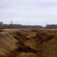 Канал Обь(Крутиха) - озеро Прыганское - река Бурла, вид на восток, Михайловский