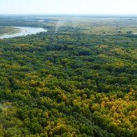 Краски осеннего леса, Михайловский