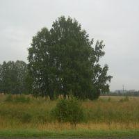 Дерево возле Мошково, Мошково