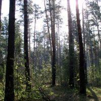 Лес в мае (Ордынское, Новосибирская область), Ордынское