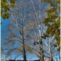 Берёзовый шепот (Birch whisper), Сузун