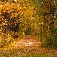Прогулка по тропкам детства (Walk down the path of childhood), Сузун
