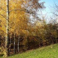 Осень - Поляна любви (Autumn - Fields of love), Сузун