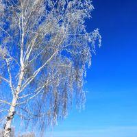Winter. Sun and Frost, Тогучин