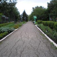 Главная аллея зоопарка, Большеречье