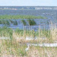 Цапля озеро ИК 2007 год, Крутинка