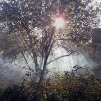 Осенний свет:  Vivat,  Silvestras!  Салют, Елена!   :), Любинский