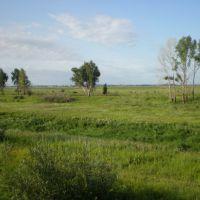 Пойма Иртыша в августе, Нововаршавка