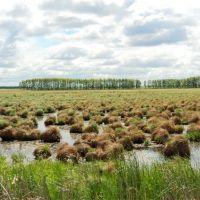 Полтавское болотце, Полтавка