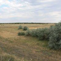 Около речки Домбаровка, Домбаровский