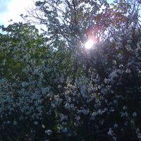 весна в лесу, Илек