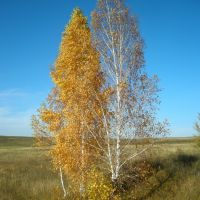 осень, Переволоцкий