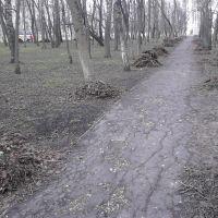 Жители убрали парк, Верховье