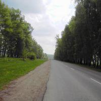 """""""Стены"""" вдоль дороги, Залегощь"""
