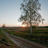 Одинокое дерево. Lonely tree., Знаменское