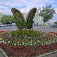 Бабочка, Орел