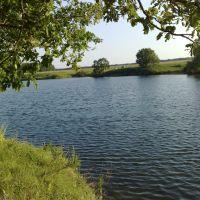 Сяськинский пруд, Белинский