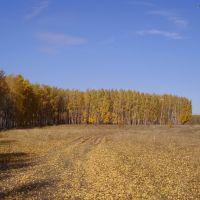 Золотая осень, Белинский