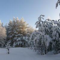 утро в зимнем лесу, Каменка