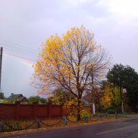 Осень 2010 (после дождя), Колышлей
