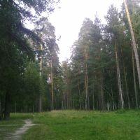 Лес в пригороде, Никольск