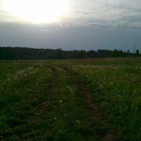 Одуванчики, июнь, Большая Соснова