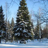 Гремячинск, за городским парком, Гремячинск
