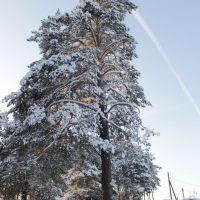 Зима, Зюкайка