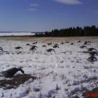 Подготовка к охоте, Ильинский