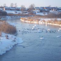 Утки на реке, Орда