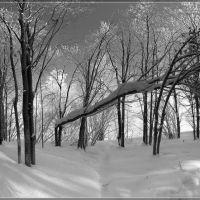 Лес 8 марта, Оса