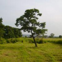 Одиноко стоящее дерево, Артем