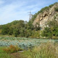 озеро с кувшинками возле Глазовки, Кировский