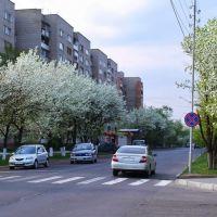 цветение груш =), Уссурийск