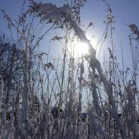 Первый снег, 4 ноября 2008, Чугуевка