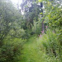 Вход в лес (22 июля 2012)., Дно