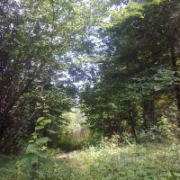 Дорога от дома (3 августа 2013)., Дно