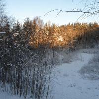 Зимний лес, Пушкинские Горы