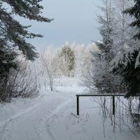 Дорога в сторону д.Бугрово, Пушкинские Горы
