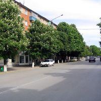 г. Азов 2004 г, Каштаны., Азов