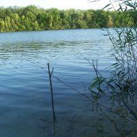 Здесь, рыбы нет!, Аютинск