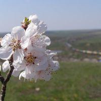 Весна. Вид с горы Караул, Белая Калитва